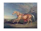 Mr Alfred Bonar's Arabian, Dare Devil Giclee Print by James Ward
