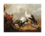 Storks, Mallards, Chickens, a Heron, a Frog and Other Birds in a River Landscape Giclee Print by Gysbert Hondecoeter