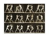 Two Men Boxing, from the 'Animal Locomotion; Series, C.1881 Reproduction photographique par Eadweard Muybridge