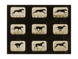 Greyhounds Running, from the 'Animal Locomotion' Series, C.1881 Photographic Print by Eadweard Muybridge