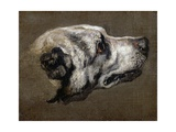 Hound Giclee Print by Pieter Or Peter Boel