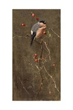 The Bullfinch Giclee Print by Edwin John Alexander