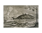 A Beached Sperm Whale with a Variety of Other Fish from Chinese Waters, 1665 Giclee Print by Jean Nieuhoff