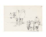 Studies of Indian Cattle Giclee Print by George Chinnery