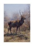 The Stag, 1875 Giclee Print by Rosa Bonheur