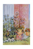 Marguerites in the Cottage Garden Giclee Print by Joan Thewsey