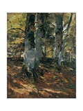 Beechwoods at Polling, Bavaria, C.1876 Giclee Print by Frank Duveneck