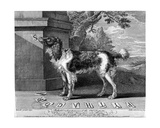 The New Chien Savant, or Learned Dog, Print Made by F-Morellon La Cave, 1752 Giclee Print by Sutton Nicholls