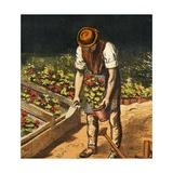 The Gardener, 1867 Giclee Print
