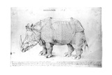 Rhinoceros, 1515 Giclee Print by Albrecht Dürer or Duerer