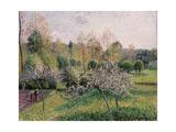 Apple Trees in Blossom, Eragny, 1895 Stampa giclée di Camille Pissarro
