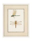 Dragonflies, C.1755-65 Giclee Print by Pierre Francois Ledoulx