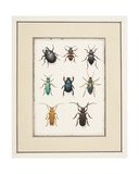 Beetles, C.1755-65 Giclee Print by Pierre Francois Ledoulx