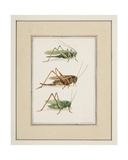 Grasshoppers, C.1755-65 Giclee Print by Pierre Francois Ledoulx