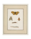 Butterflies, Moths and Caterpillars, C.1755-65 Giclee Print by Pierre Francois Ledoulx