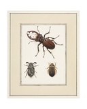 Stag, Chafer and Geelgerande Beetles, C.1755-65 Giclee Print by Pierre Francois Ledoulx