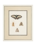 Swallowtail Butterfly, Mayfly and Two Moths, C.1755-65 Giclee Print by Pierre Francois Ledoulx