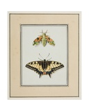 Hawk Moth and Old World Swallowtail Butterfly, C.1755-65 Giclee Print by Pierre Francois Ledoulx