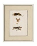 Mole Cricket, Scorpion and Grasshopper, C.1755-65 Giclee Print by Pierre Francois Ledoulx