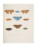 Foreign Butterflies, C.1755-65 Giclee Print by Pierre Francois Ledoulx
