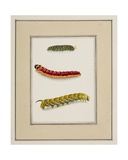Caterpillars, C.1755-65 Giclee Print by Pierre Francois Ledoulx