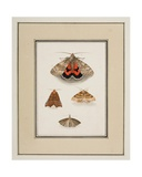Moths, C.1755-65 Giclee Print by Pierre Francois Ledoulx