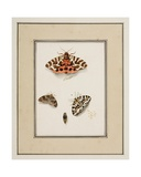 Butterflies, C.1755-65 Giclee Print by Pierre Francois Ledoulx
