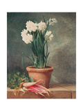 Narcissus and Radishes Giclee Print by Henri Roland De La Porte