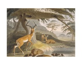 The Pallah, 1804-05 Giclee Print by Samuel Daniell