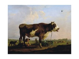 A Bull Giclee Print by Balthasar Paul Ommeganck