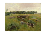 Goats in a Field Giclee Print by Walter Frederick Osborne