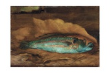 Study of the Parrot Fish, Samoa, 1890 Giclee Print by John La Farge