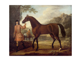 The Godolphin Arabian Giclee Print by John Wootton