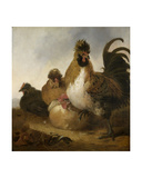 A Cock and Hens Giclee Print by Aelbert Cuyp