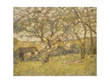 Apple Blossom Giclee Print by James Charles