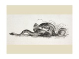 A Snake Slithers Through a Royal Crown, 1890 Giclee Print