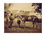 Wild Dayrell, Winner of the Derby in 1856 Giclee Print
