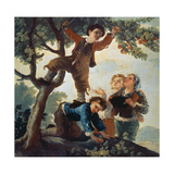 Boys Picking Fruit, Cartoon for a Tapestry, 1779-80 Lámina giclée por Francisco de Goya