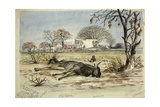 Dead Bridled Gnu Near Covered Wagons at a Campsite of the Baines and Chapman Expedition, 1861 Giclee Print by Thomas Baines