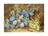 Plums and Grapes, 1877 Giclee Print by Thomas Collier