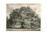 The Chandos Oak, Michendon House, Southgate, London Giclee Print by Jacob George Strutt