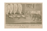 A Waddling Proccession from the Stock Exchange, or the Bulls and Bears Making Long Faces Reproduction procédé giclée