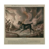 The London Fireman's Dog Giclee Print by William Heath