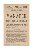 Advertisement for the Manatee Giclee Print