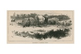 Sketches of Gipsy Life; Encampment at Mitcham Common Giclee Print by William Heysham Overend