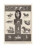 Motions of Animals Illustrated by the Instantaneous Photographs of Mr Muybridge Giclee Print by Walter Wilson
