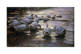 Ducks in Reflected Light by the Shore of a Lake; Enten Im Reflexlicht Am Seeufer Giclee Print by Alexander Koester