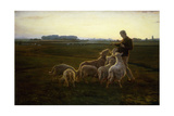 A Shepherd and His Sheep with Geese Beyond, 1896 Giclee Print by Carl Christian Ferdinand Wentorf