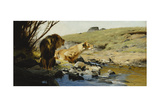 A Lion and Lioness at a Stream Giclee Print by Wilhelm Kuhnert