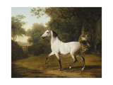 A Grey Arab Stallion in a Wooded Landscape Giclee Print by Jacques-Laurent Agasse